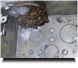 Wasp Nest Inside An Electrical Junction Box