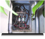 Main Fuse Box with Spider Infestation